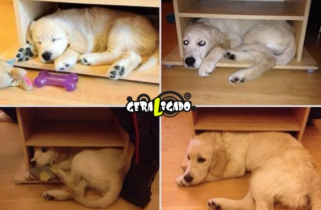 'Antes e depois' muito legais de donos e seus animais de estimação17