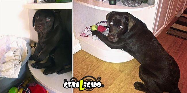'Antes e depois' muito legais de donos e seus animais de estimação20