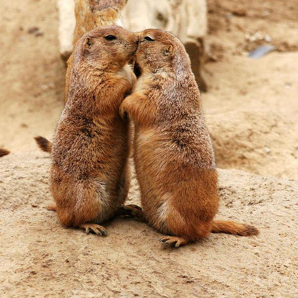 6 de julho Dia Internacional do Beijo24