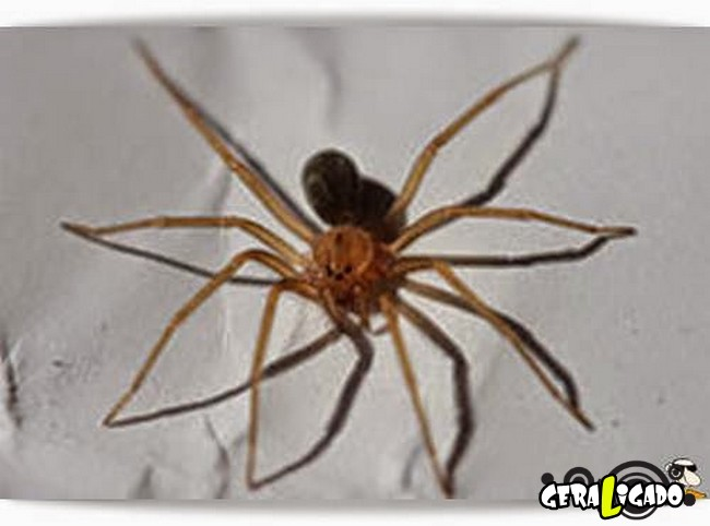 9 criaturas nojentas que vivem escondidos em seu quarto6