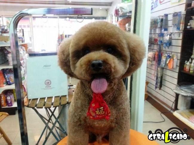 Cachorros com cortes bizarros1