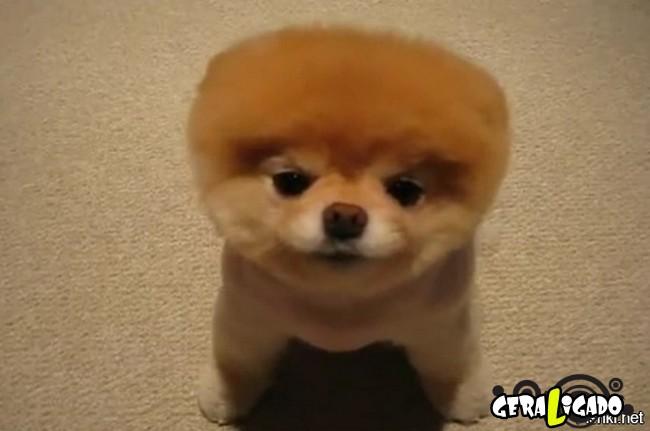 Cachorros com cortes bizarros7
