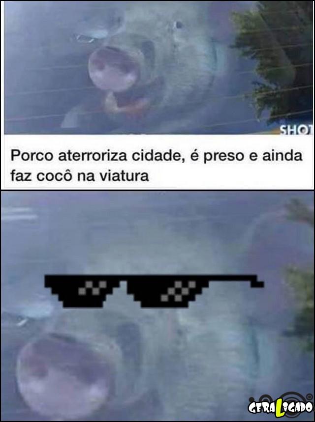 4 Um porco vida loka