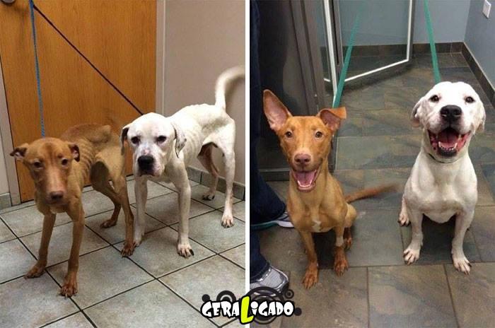 Estes dois cães escaparam da morte