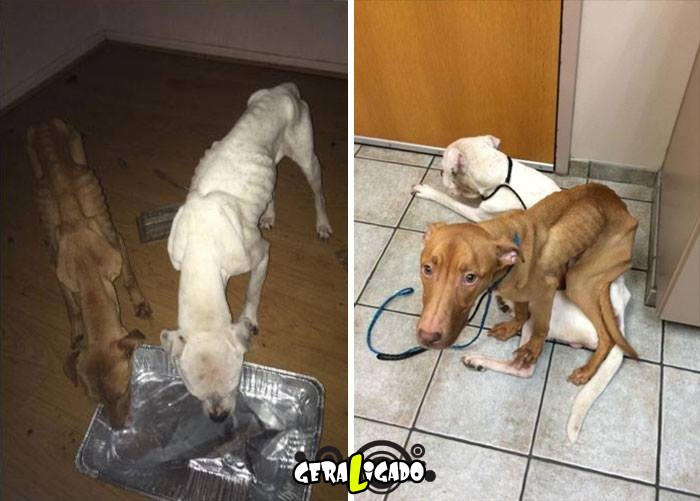 Estes dois cães escaparam da morte1