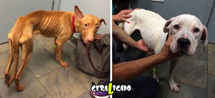 Estes dois cães escaparam da morte5