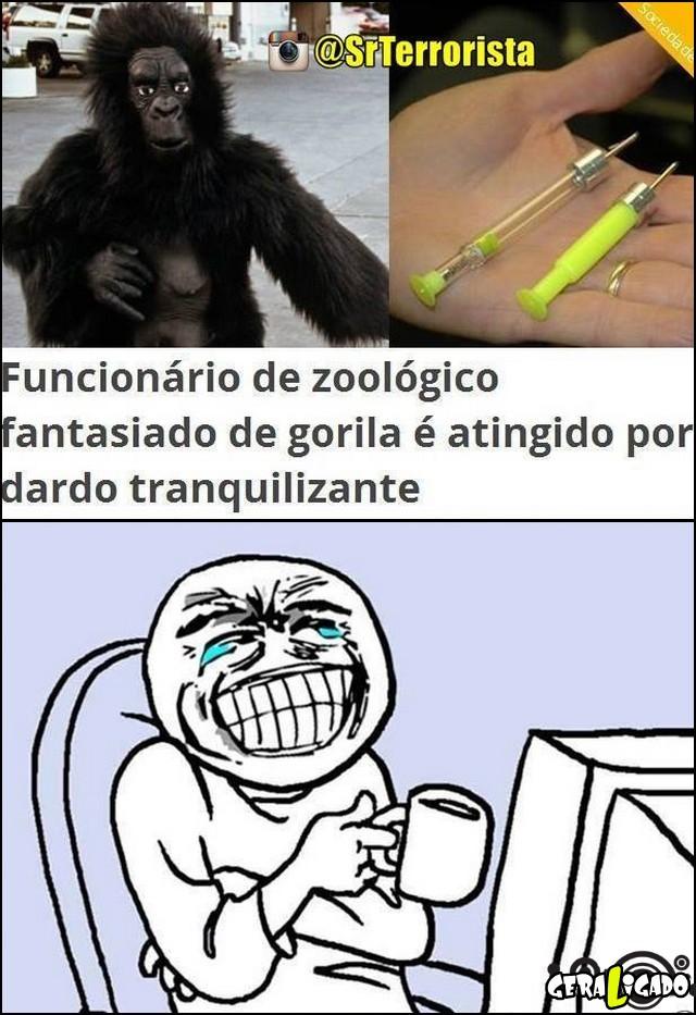 2 Fantasiado de gorila é atingido por dardo tranquilizante