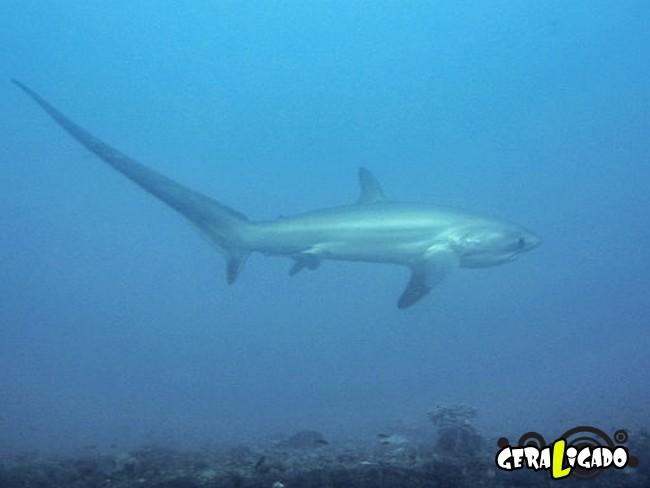 8 espécies de tubarões bizarras que você não conhecia8