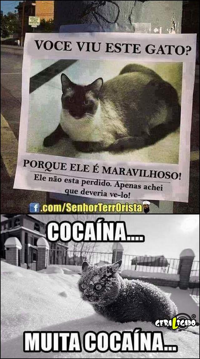 1 Você viu este gato
