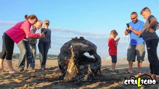 5 coisas bizarras que já foram encontradas na beira da praia1