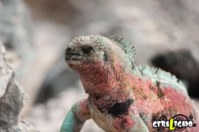 Conheça 20 criaturas naturalmente cor de rosa10