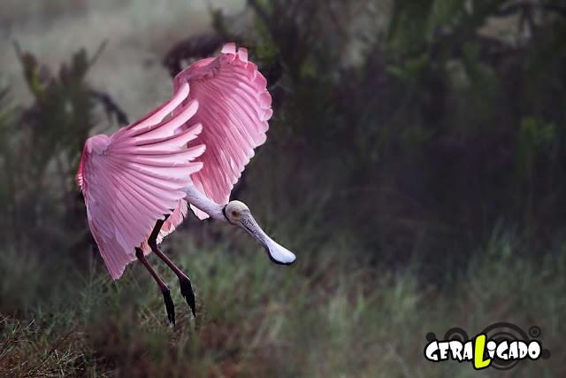 Conheça 20 criaturas naturalmente cor de rosa11