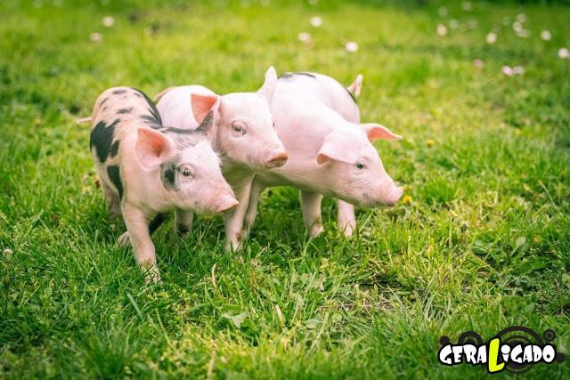 Conheça 20 criaturas naturalmente cor de rosa18