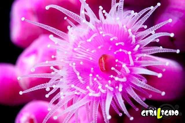 Conheça 20 criaturas naturalmente cor de rosa19