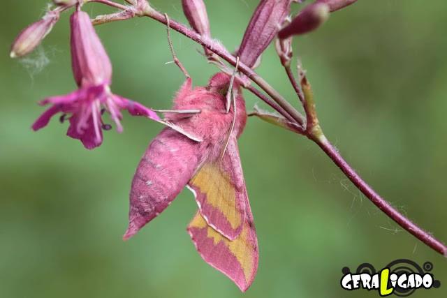 Conheça 20 criaturas naturalmente cor de rosa21