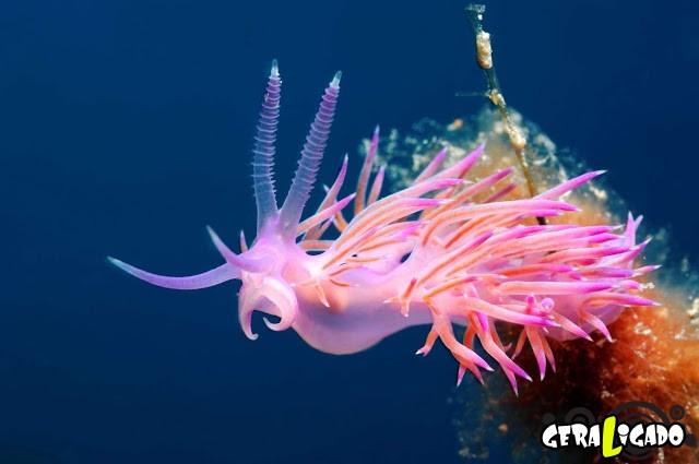Conheça 20 criaturas naturalmente cor de rosa23