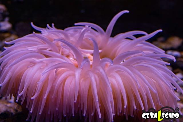 Conheça 20 criaturas naturalmente cor de rosa24