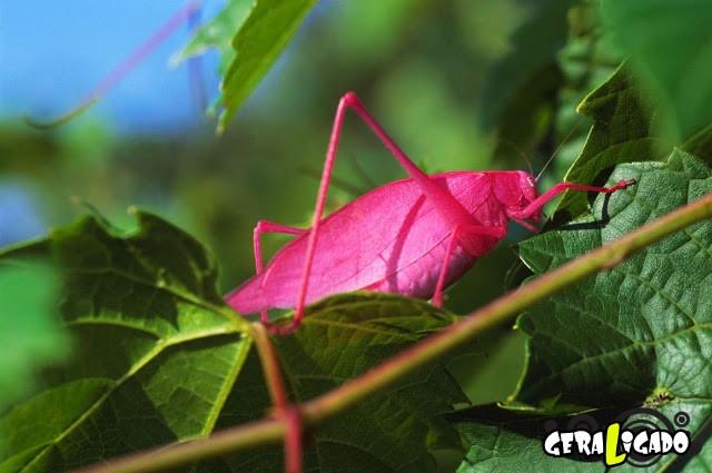Conheça 20 criaturas naturalmente cor de rosa25