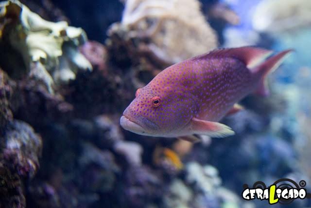 Conheça 20 criaturas naturalmente cor de rosa26