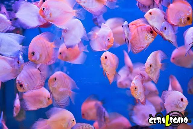 Conheça 20 criaturas naturalmente cor de rosa27