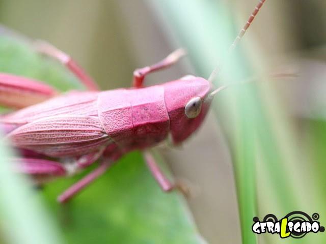 Conheça 20 criaturas naturalmente cor de rosa28