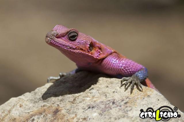 Conheça 20 criaturas naturalmente cor de rosa5