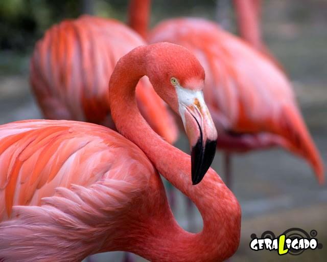 Conheça 20 criaturas naturalmente cor de rosa7