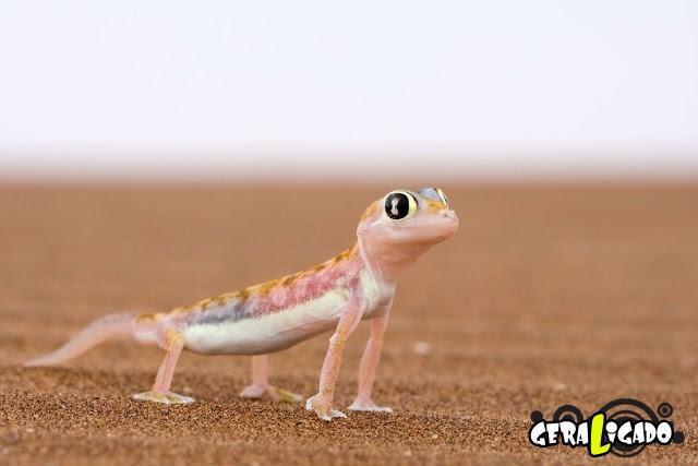 Conheça 20 criaturas naturalmente cor de rosa8