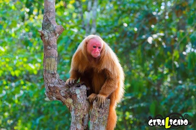 Conheça 20 criaturas naturalmente cor de rosa9