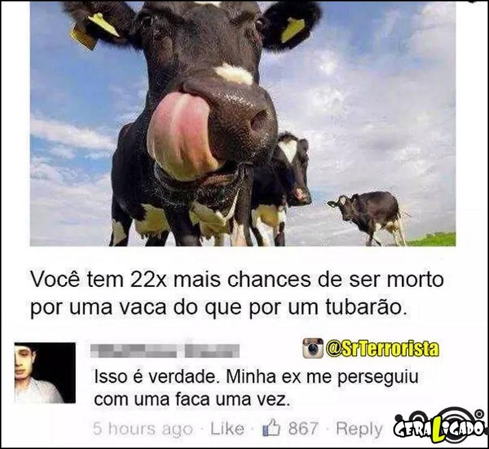 2-morrer-por-causa-de-uma-vaca