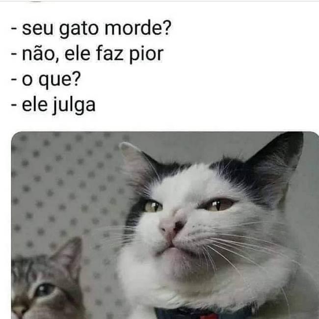 Gatos não são de Deus..