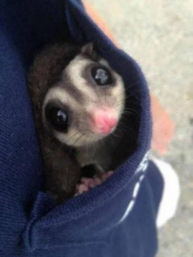 Uma mulher chamada Vanuza encontrou um pequeno animal prestes a morrer.10