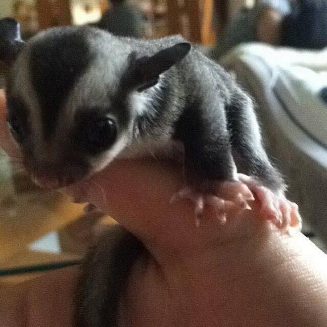 Uma mulher chamada Vanuza encontrou um pequeno animal prestes a morrer.13