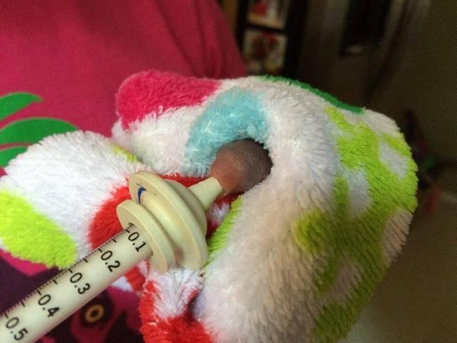 Uma mulher chamada Vanuza encontrou um pequeno animal prestes a morrer.3