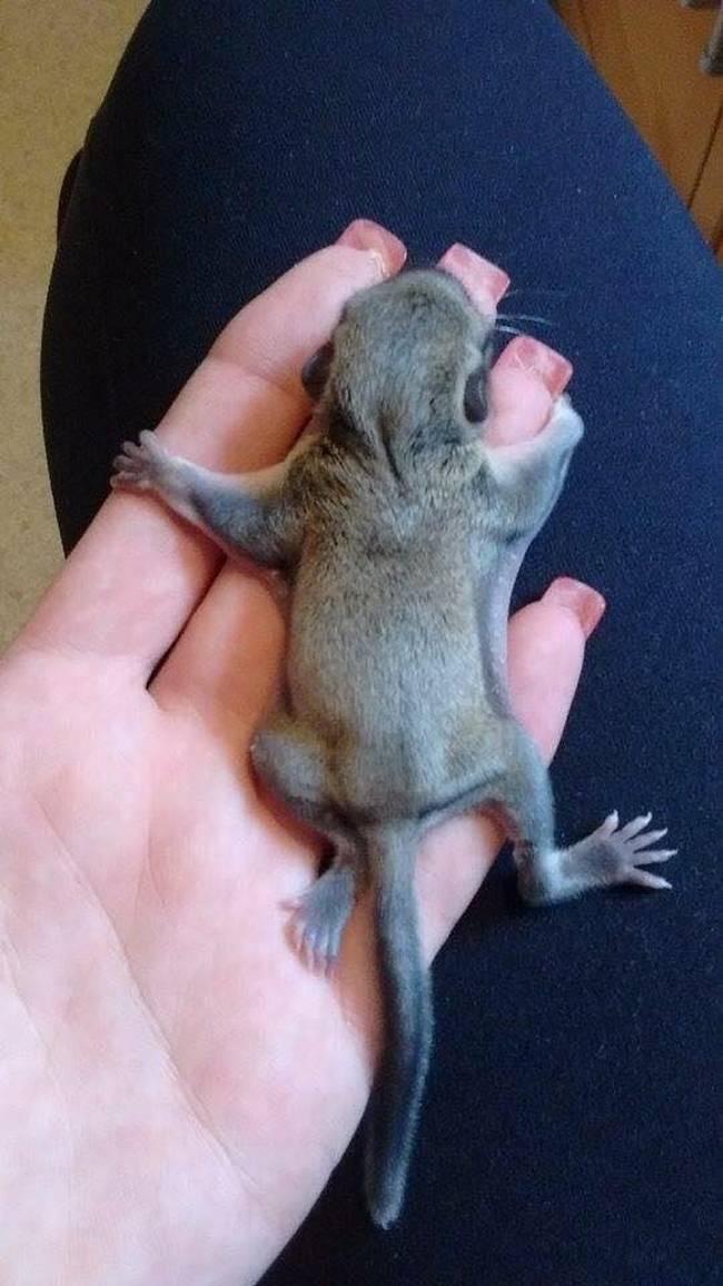 Uma mulher chamada Vanuza encontrou um pequeno animal prestes a morrer.6