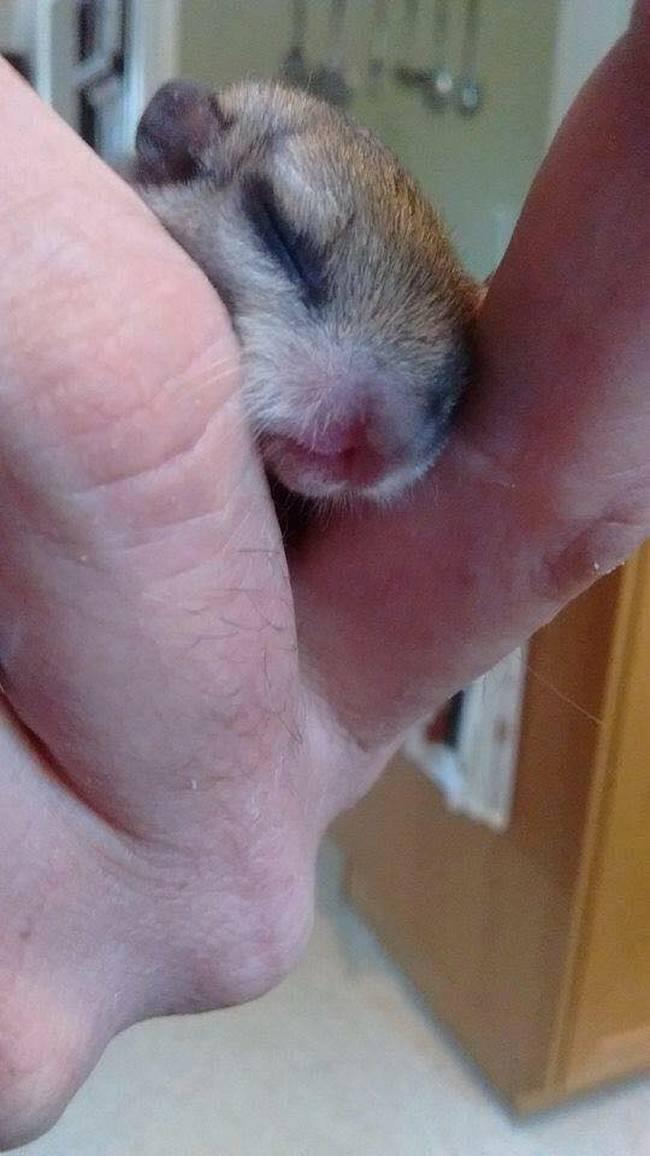 Uma mulher chamada Vanuza encontrou um pequeno animal prestes a morrer.7