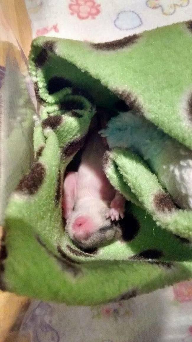 Uma mulher chamada Vanuza encontrou um pequeno animal prestes a morrer.8