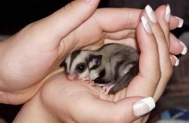 Uma mulher chamada Vanuza encontrou um pequeno animal prestes a morrer.9