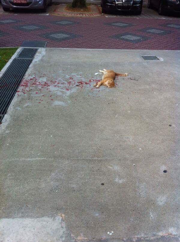 Os gatos nem sempre caem em pé…1