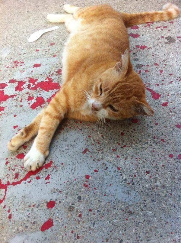 Os gatos nem sempre caem em pé…3