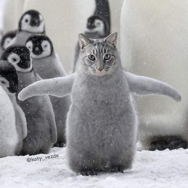 E se todos os animais tivessem cara de gato10