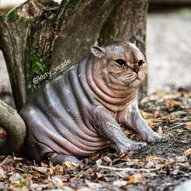 E se todos os animais tivessem cara de gato12