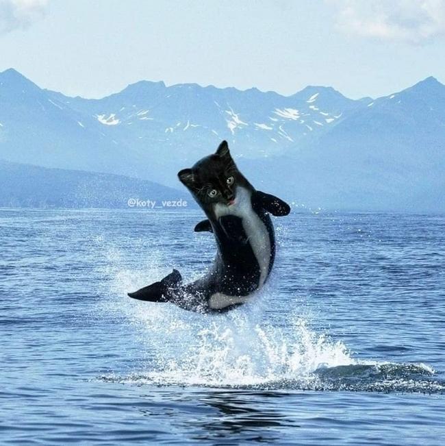 E se todos os animais tivessem cara de gato14
