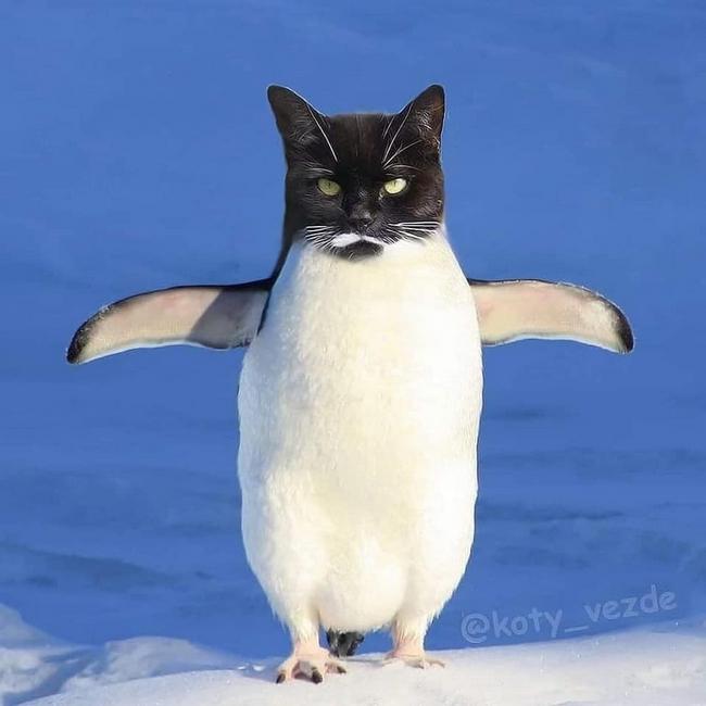 E se todos os animais tivessem cara de gato15