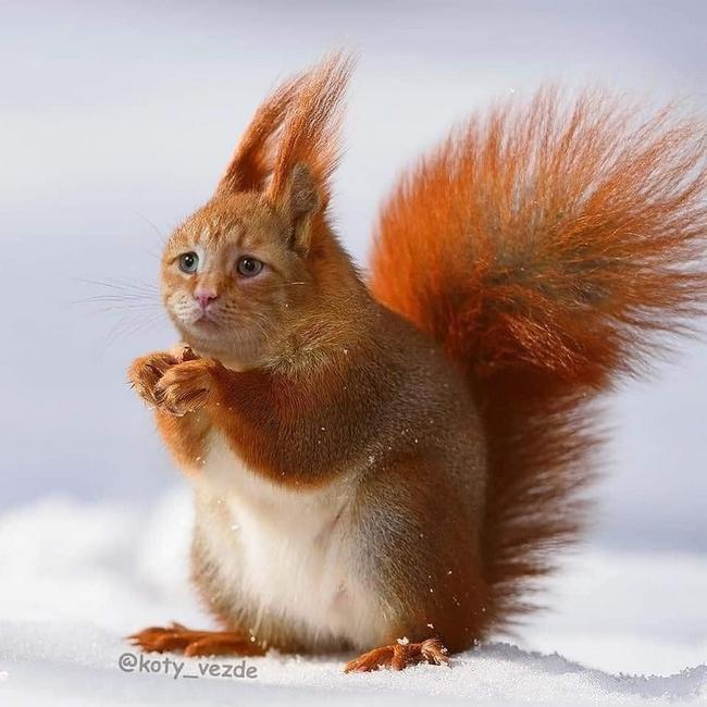 E se todos os animais tivessem cara de gato17