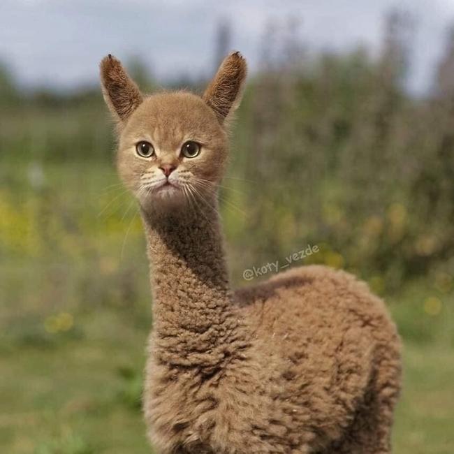 E se todos os animais tivessem cara de gato2