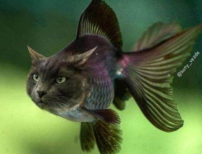E se todos os animais tivessem cara de gato3