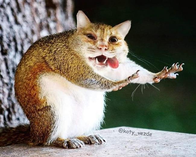 E se todos os animais tivessem cara de gato4