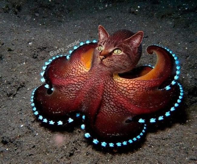 E se todos os animais tivessem cara de gato5