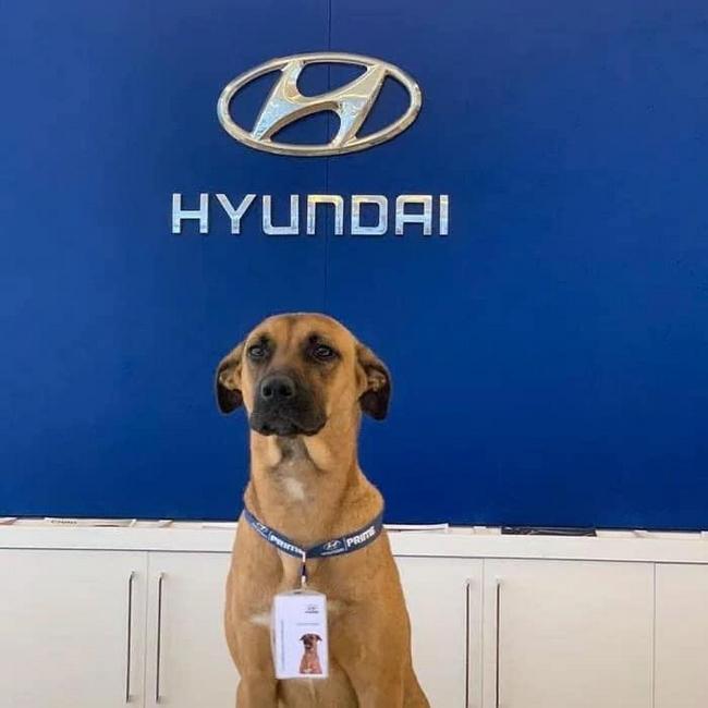 Uma concessionária da Hyundai no ES, adotou um cão!